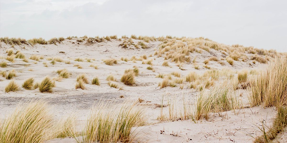 Op solo-expeditie in de duinen