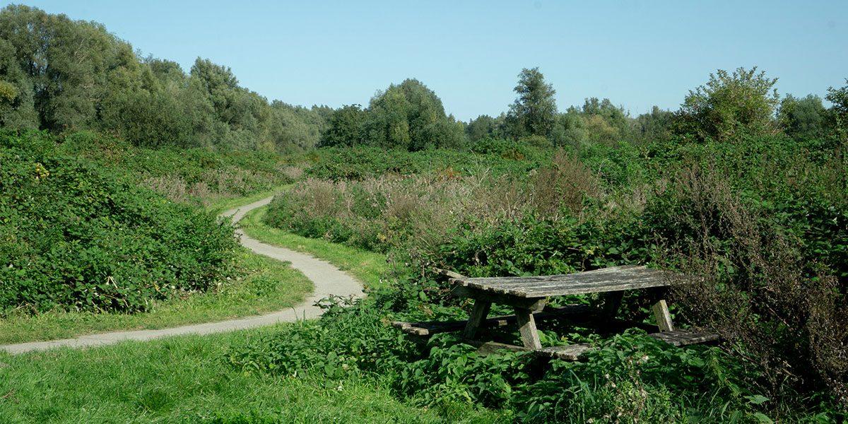 Wandelen in Almere: de mooiste routes